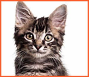 low resolution image of a kitten